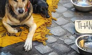 Απίστευτη μεταμόρφωση σκύλου - Δεν θα πιστεύετε πώς έγινε μετά το κούρεμα