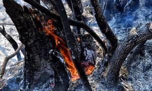Πάνω από 10.000 στρέμματα κάηκαν στις πρόσφατες πυρκαγιές σε Ζάκυνθο και Λουτράκι