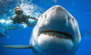 Εμφανίζεται καρχαρίας 6 μέτρων και «κόβει» την ανάσα!