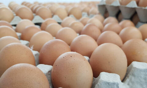H μεγάλη αλήθεια που πρέπει να γνωρίζεις για τα αυγά