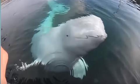Αυτή η φάλαινα... λήστεψε κωπηλάτη! Δείτε το βίντεο
