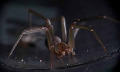 Συναγερμός: Αυτή είναι η αράχνη που προκαλεί τρόμο – Δείτε τι μπορεί να πάθετε (pics)