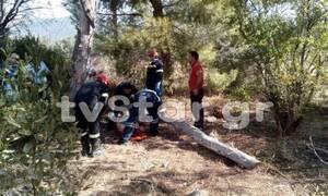 Εύβοια: Κορμός δέντρου καταπλάκωσε γυναίκα - Πώς συνέβη το σοκαριστικό περιστατικό