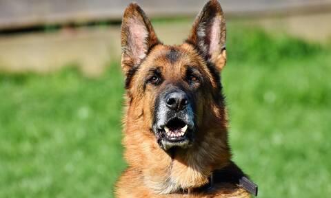 Κρήτη: Παραλίγο νέα τραγωδία με σκυλί - Στο χειρουργείο 10χρονος