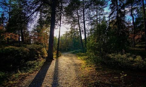Περισσότερα από το 40% των ειδών δένδρων στη Γηραιά Ήπειρο απειλούνται με εξαφάνιση