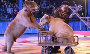 Θεία δίκη! Αρκούδα κάνει ντου στον θηριοδαμαστή! (vid)