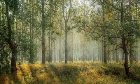 Αδιανόητο: Κρυβόταν στο δάσος για 24 χρόνια – Δείτε γιατί (pics)