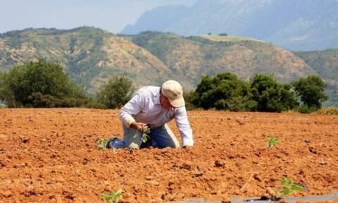 Κρήτη: Τους υπόσχονταν εκατομμύρια – Αυτή η παραγωγή όμως κατέστρεψε τους αγρότες