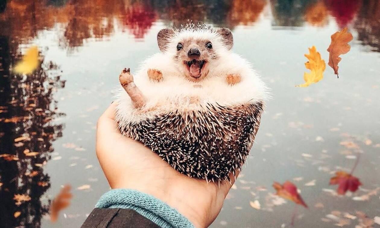 Ο σκαντζόχοιρος - petfluencer που «ρίχνει» το Instagram με το χαμόγελό του (photos)