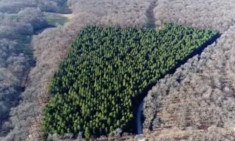 Σε αυτό το δάσος πήγαινε για κυνήγι ο «μυθικός» Ηρακλής! (vid)