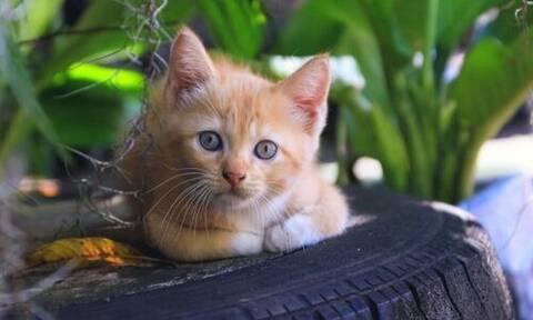 Έφτιαξε κρεβάτια για αδέσποτες γάτες από λάστιχα αυτοκινήτων!