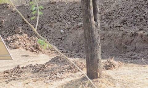 Η φωτογραφία που τρελαίνει: Μπορείς να βρεις πού είναι η λεοπάρδαλη; (pics)
