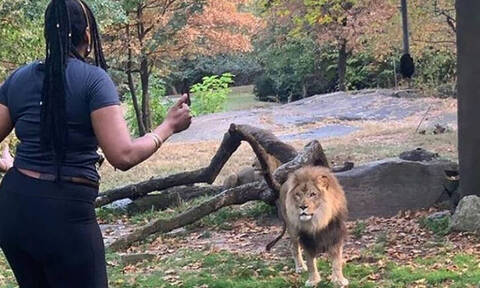 Aπίστευτο: Γυναίκα πήδηξε μέσα σε κλουβί λιονταριού σε ζωολογικό κήπο
