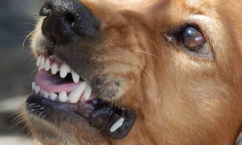 Λαμία: Αδέσποτα σκυλιά επιτέθηκαν σε γυναίκα - Τραυματίστηκε σοβαρά