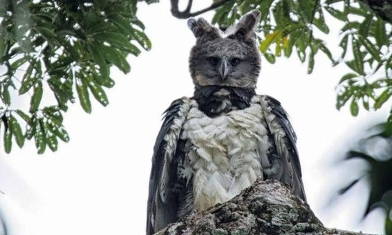 Οι φωτογραφίες που σαρώνουν τα social media! Πραγματικός αετός ή αποκριάτικο κοστούμι; (pics)