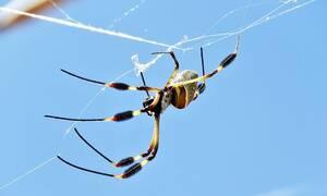 Γυναίκα έκανε αυτο το κόλπο και έδιωξε τις αράχνες από το σπίτι - Κοστίζει μόλις 3 ευρώ
