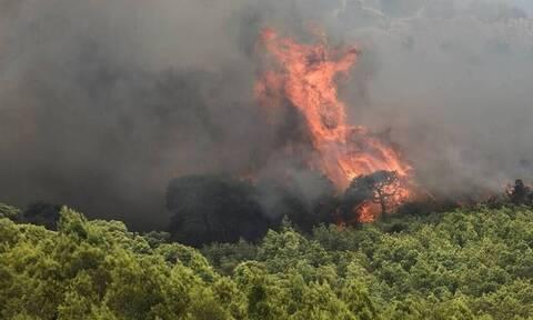 Φωτιά ΤΩΡΑ στο Βαρνάβα – Κοντά σε σπίτια οι φλόγες