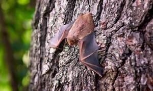 Ανακαλύφθηκε η μεγαλύτερη αποικία νυχτερίδων στην Ελλάδα - Δείτε πού βρίσκεται (pics)
