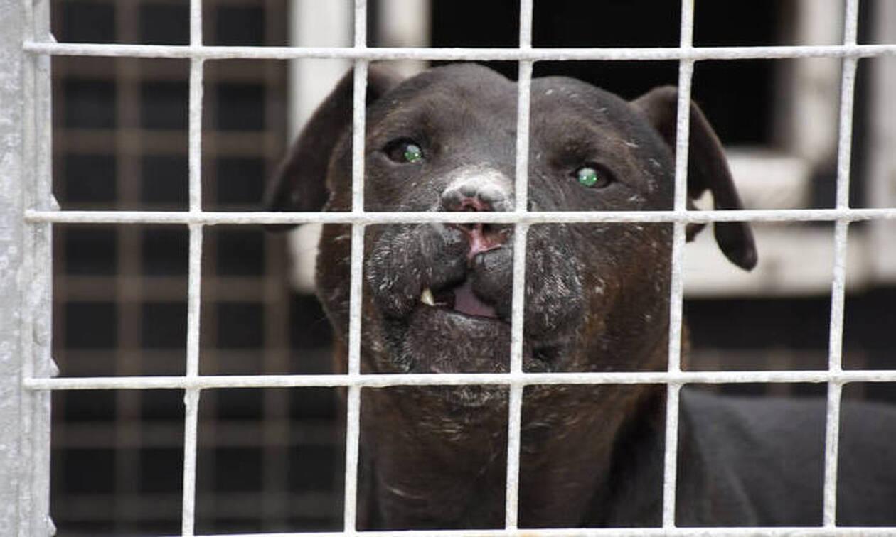 Φρίκη: Τάιζε ζωντανές γάτες τους σκύλους του