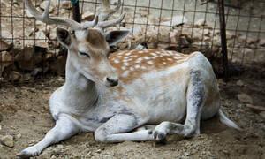 Φρίκη! Σκότωσαν τέσσερα ελάφια στον δημοτικό κήπο Κατερίνης
