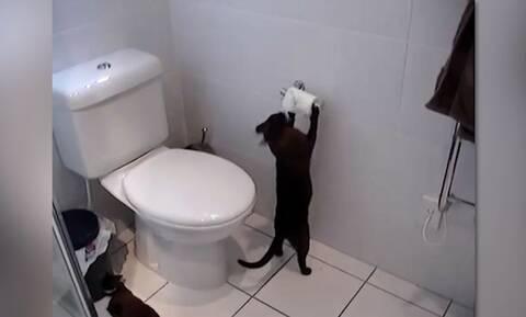 Απολαυστικό! Αυτό συμβαίνει όταν μένουν μόνες τους οι γάτες στο σπίτι (vid)