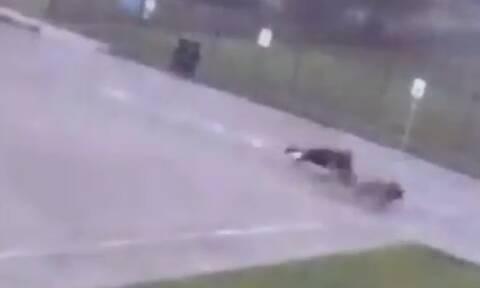 Σοκ: Κεραυνός χτύπησε άνδρα σε πάρκο - Πώς σώθηκε; (vid)