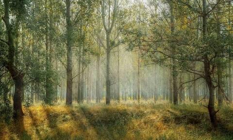 Γρεβενά: Η βόλτα στο δάσος έκρυβε μια τεράστια έκπληξη - Δείτε τι ανακάλυψε