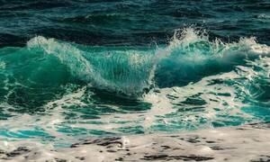 Καβάλα: Έπαθαν σοκ με αυτό που ψάρεψαν - «Πάγωσαν» όλοι στο λιμάνι