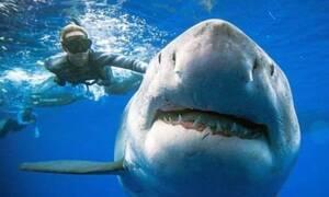Εμφανίζεται καρχαρίας 6 μέτρων και «κόβει» την ανάσα! (vid)