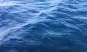 Εύβοια: Τρόμαξαν με αυτά που είδαν να βγαίνουν στο νερό!
