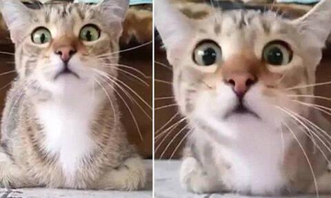 Δες εδώ αντίδραση: Γάτα βλέπει θρίλερ και την πιάνει πανικός!
