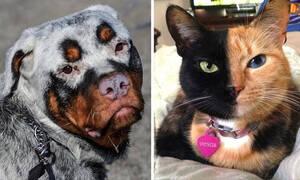 Ζώα που γεννήθηκαν με μοναδικά χαρακτηριστικά (vid)