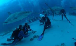 Ατρόμητη 10χρονη κολυμπάει μαζί με καρχαρίες - Δείτε την (vid)