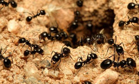 Έχετε έντομα σπίτι; Έτσι θα τα εξαφανίσετε!