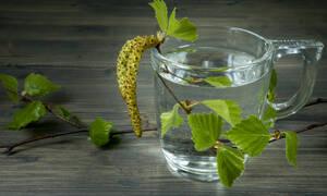 Νερό σημύδας: Οφέλη και παρενέργειες από την κατανάλωση (εικόνες)