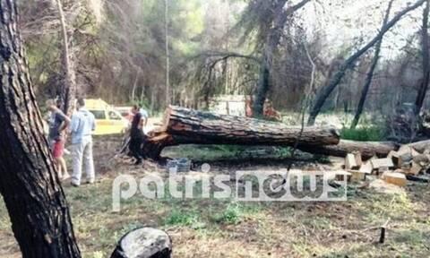Ηλεία: Νεκρή 70χρονη – Καταπλακώθηκε από δέντρο την ώρα που έκοβε ξύλα