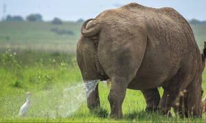 Το πιο αστείο στιγμιότυπο: Ρινόκερος «τα κάνει» πάνω σε πάπια! (pics)