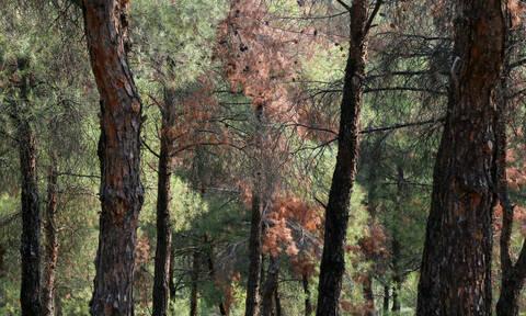 Τραγωδία στην Ηλεία: Και δεύτερος νεκρός στο δάσος της Στροφυλιάς