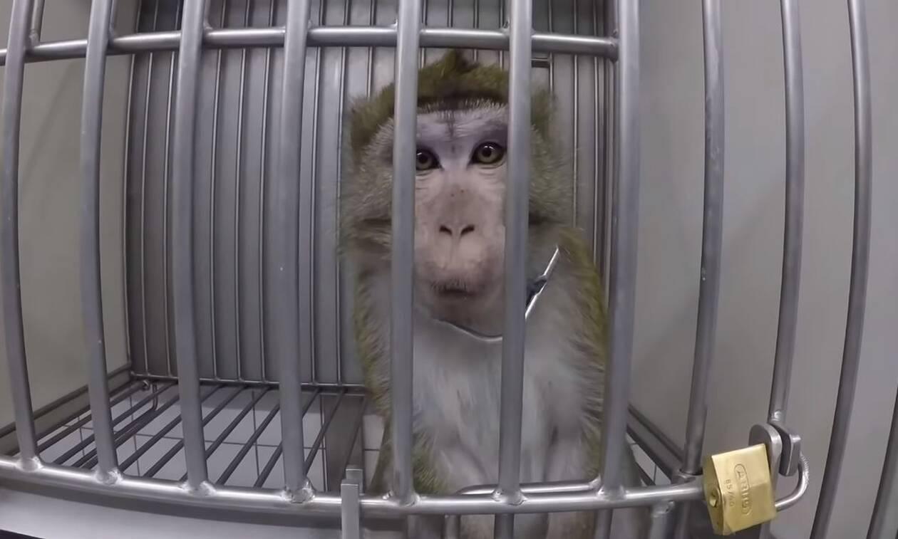 Οργή: Στο «φως» βίντεο - ντοκουμέντο με φρικτά βασανιστήρια πειραματόζωων