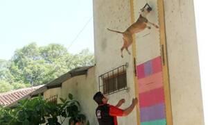 Σκύλος κάνει άλμα στον… θεό! - Δείτε το απίστευτο video