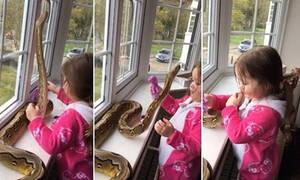 Κοριτσάκι 3 ετών παίζει με το κατοικίδιό της... Έναν πύθωνα 2,5 μέτρων! (vid)