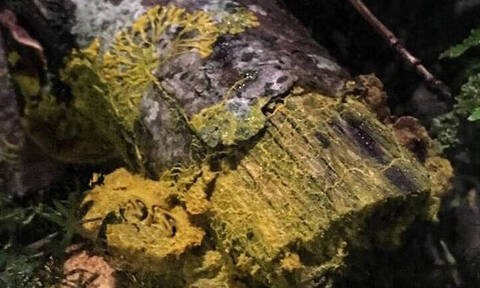 Το μυστηριώδες κίτρινο πλάσμα που έχει αφήσει άφωνους τους επιστήμονες - Τι είναι;