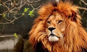 Τρόμος: Λιοντάρι όρμηξε στον εκπαιδευτή του - Σκληρές εικόνες!