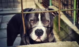 Σκύλος - «διάβολος»: Επιτέθηκε σε γυναίκα και της διέλυσε το πρόσωπο - ΣΚΛΗΡΕΣ ΕΙΚΟΝΕΣ (pics)