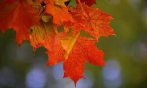 Ο φετινός Σεπτέμβριος ήταν ο πιο ζεστός στα μετεωρολογικά χρονικά παγκοσμίως από το 1880