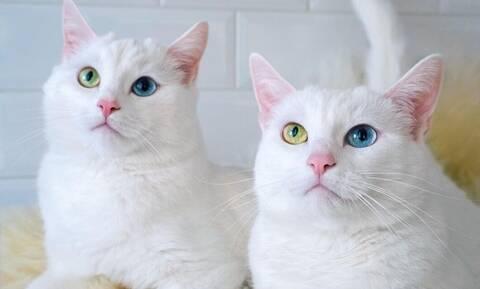 Οι δίδυμες γάτες που έχουν «τρελάνει» το Instagram (photos)