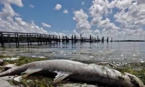 Το τρομερό «τέρας» που απειλεί στις ακτές των ΗΠΑ! (vid)