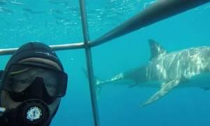 Είχε πίσω του έναν τεράστιο λευκό καρχαρία αλλά δεν… χαμπάριασε! (vid)