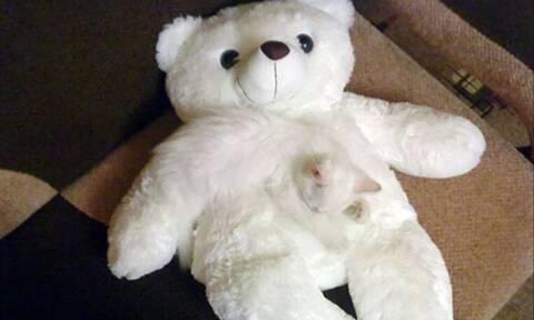 Εσείς μπορείτε να διακρίνετε με την πρώτη ματιά τις καμουφλαρισμένες γάτες; (pics)
