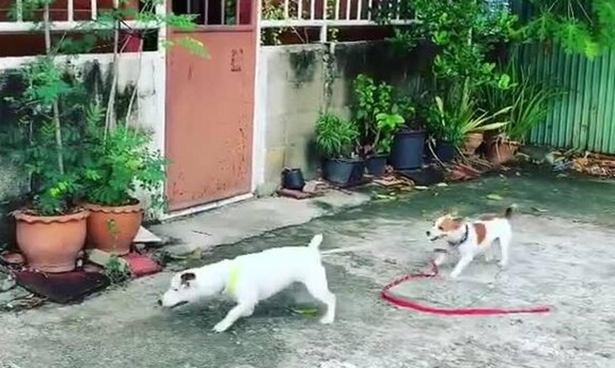 Αυτό δεν είναι σκύλος, είναι… άνθρωπος! Δείτε το απίθανο βίντεο